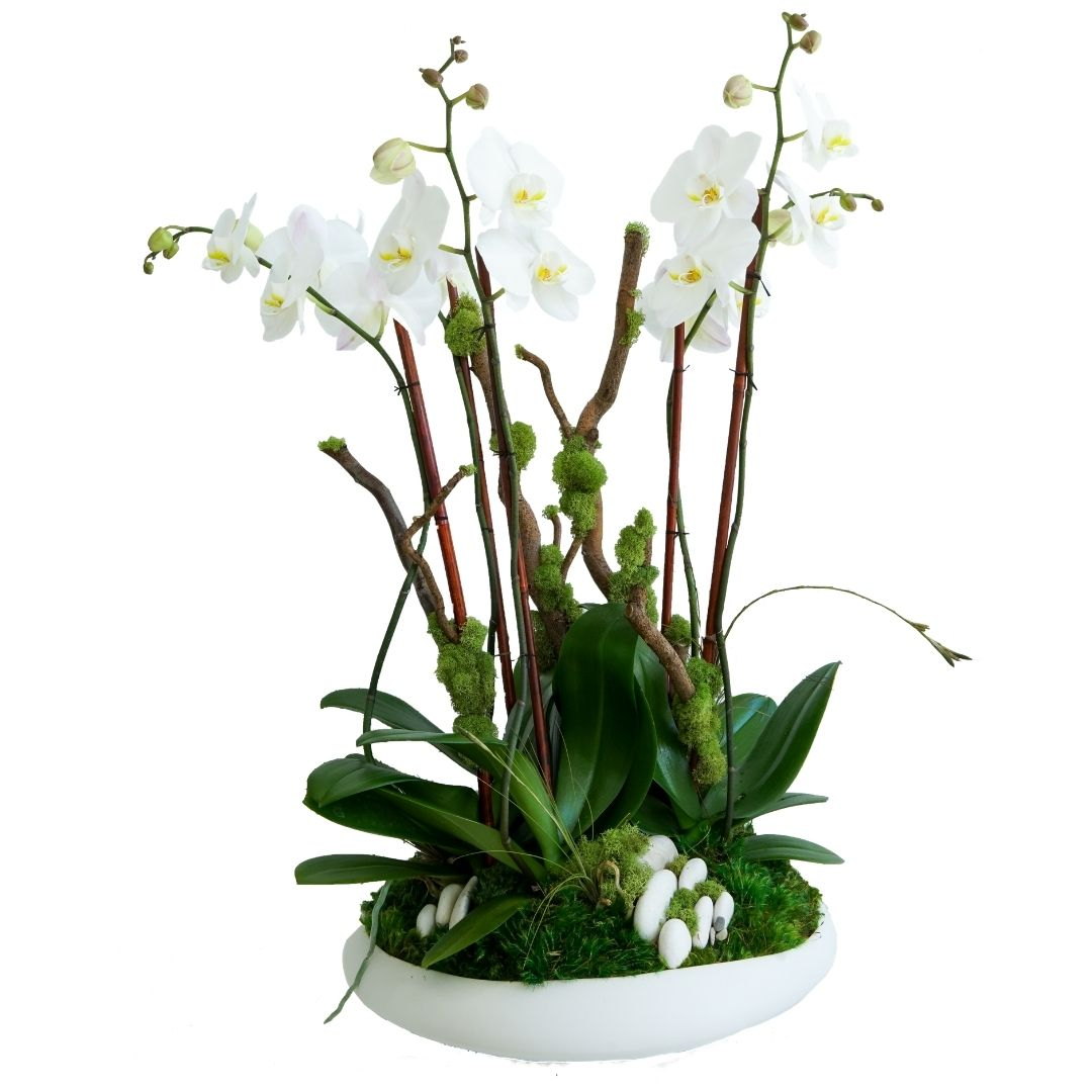 """Sydney Large - Five Orchids (29.5"""" H x 16.5"""" D)"""