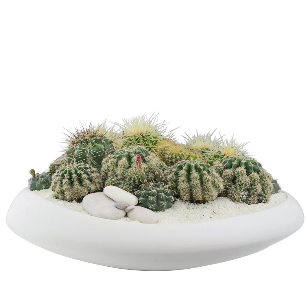 """Sydney Large- Cacti (17.5"""" D x 9"""" H)"""