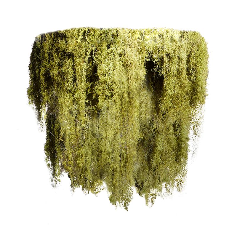 """Moss Chandelier - 2 Tier (Medium - 41"""")"""