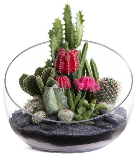 Half Moon Large Black Terrarium