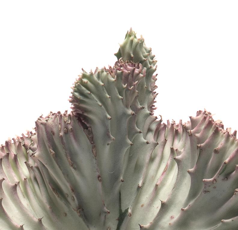 Miami Sphere Large Black - Coral Cactus