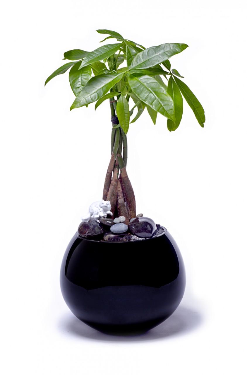Miami Sphere Large Black - Single Money Tree