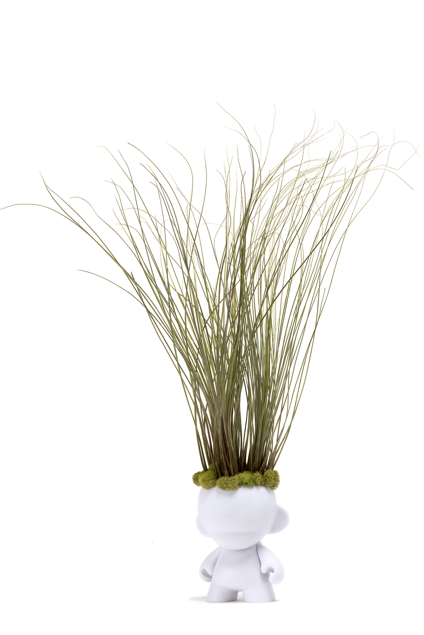 Munny Small Rockstar - Large Juncea Airplants