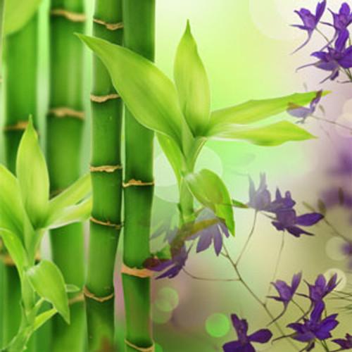 Australian Bamboo Grass