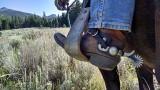 Spurred or Spurned? Proper Spur Use for Happy Horseback Riding