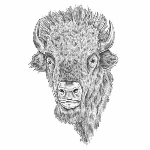 Buffalo Gaze Canvas Art