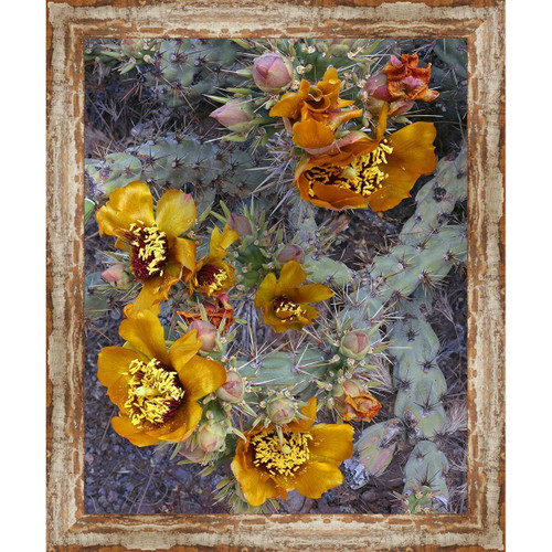 El Paso Cactus Framed Canvas