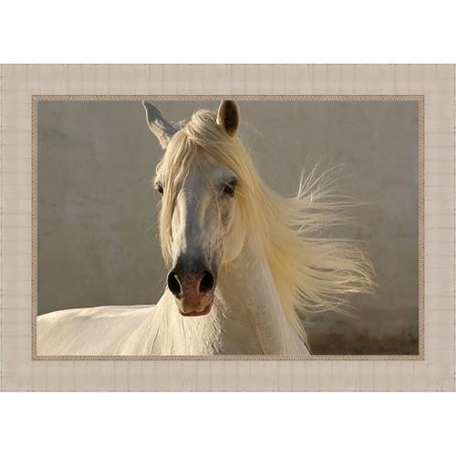 Graceful Horse Framed Canvas