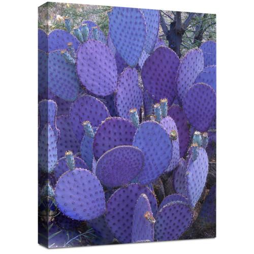 Indigo Cactus Canvas Wall Art