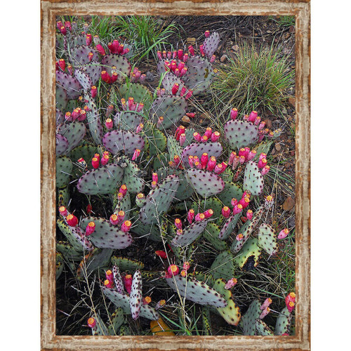 Marfa Cactus Framed Canvas