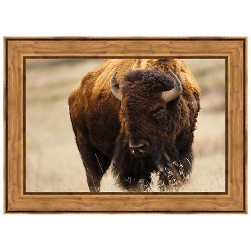 Montana Bison Framed Canvas