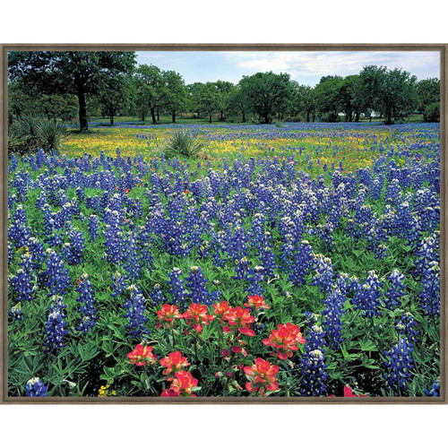 Prairie Flower Field Framed Canvas