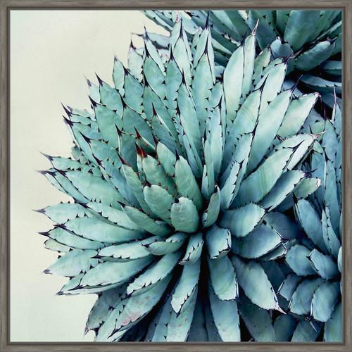 Prickly Desert I Canvas Art
