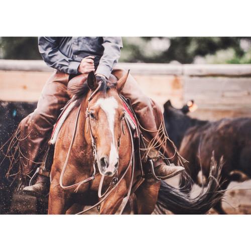 Rodeo Horse I Canvas Art