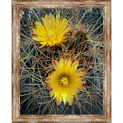 Scottsdale Cactus Framed Canvas