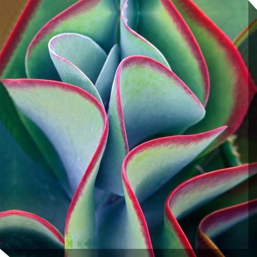 Southwest Leaves Canvas Art