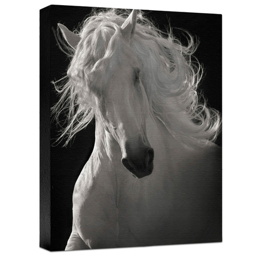 The Lusitano Dancer Gallery Wrapped Canvas