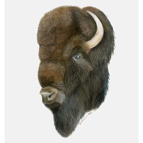 Tonkawa Bison Canvas Art