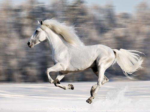 Wild Winter Horse Canvas Wall Art