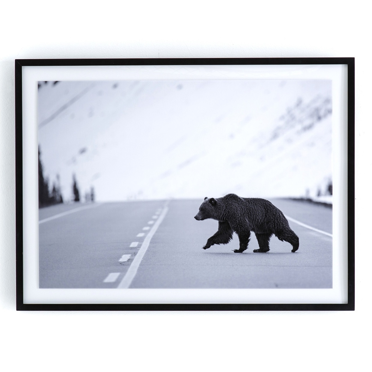 Grizzly Bear Black Wood Framed Wall Art 40