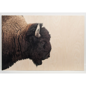 American Bison Large Wall Art