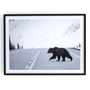 "Grizzly Bear Black Wood Framed Wall Art 60"""