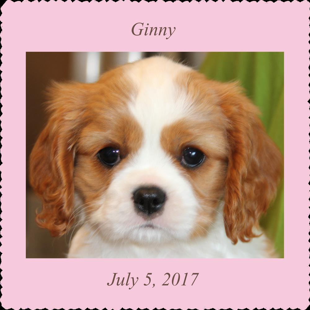 New puppy - girl