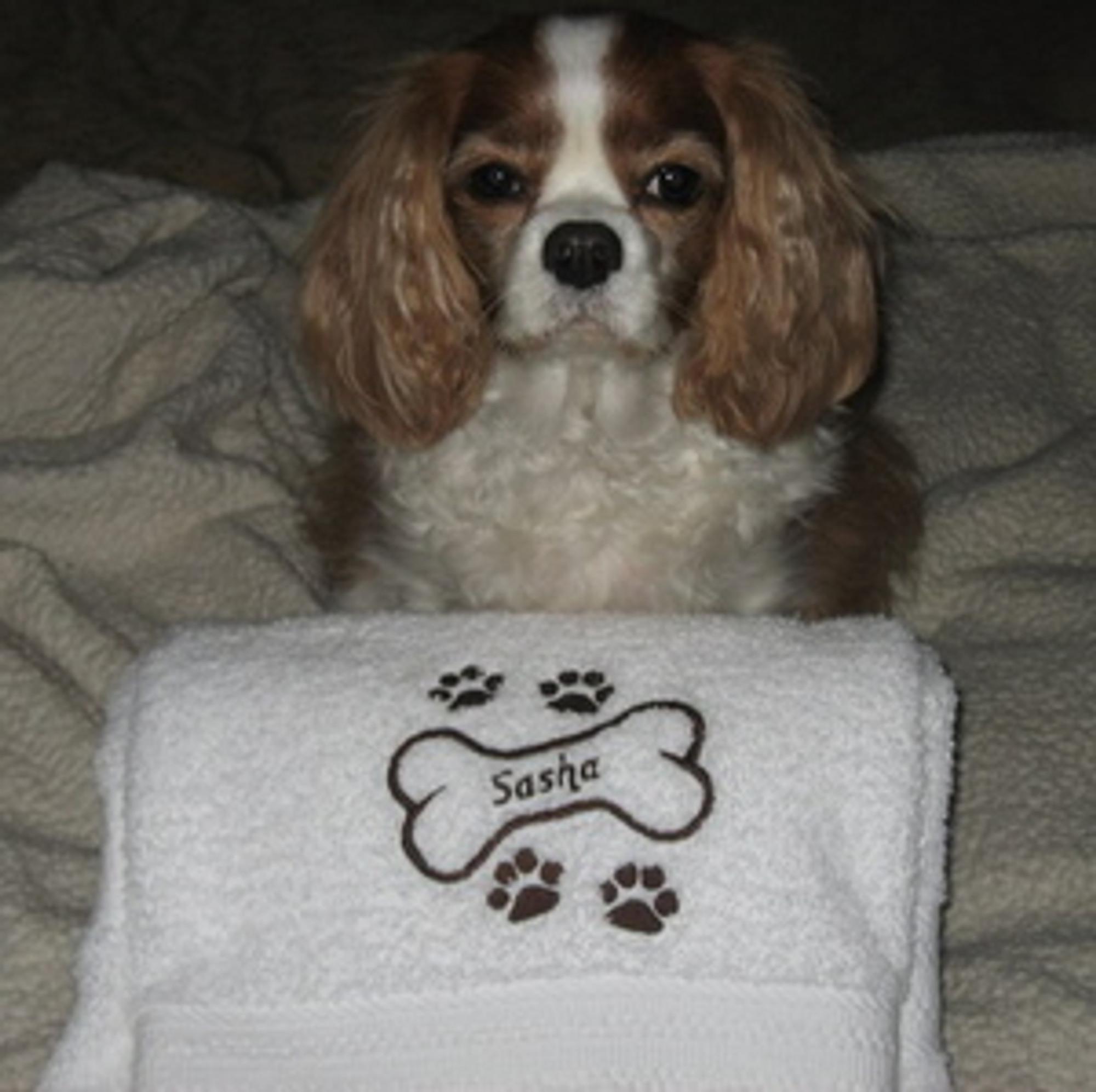 b935e8cd4e69 Dog Bath Towel - Plush Embroidered (personalized) - Paws Fur Treats