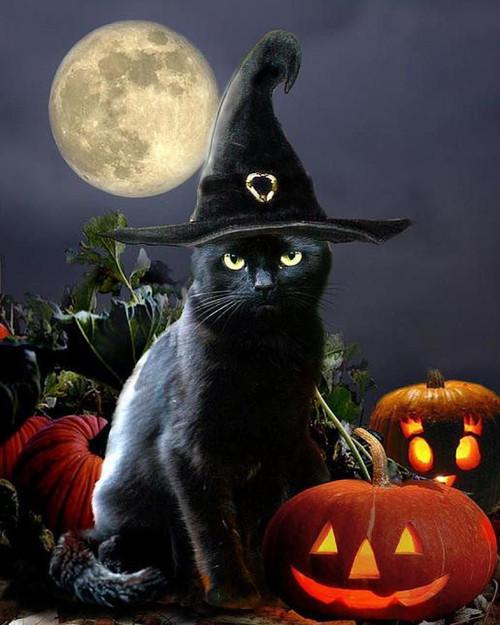 Ominous Black Cat - DIY Paint By Numbers Kit