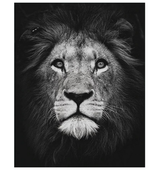 Angry Lion - DIY Painting By Numbers Kit