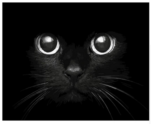 Intrigued Cat - DIY Painting By Numbers Kit