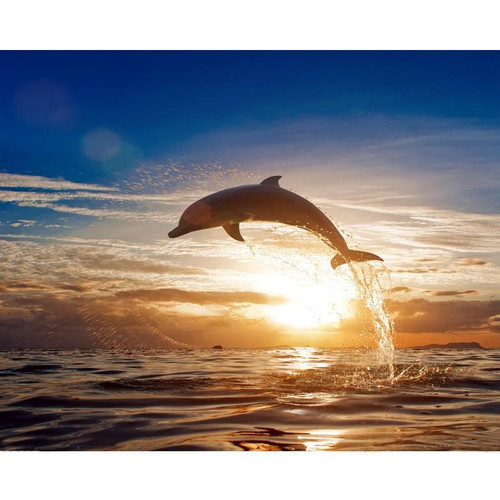 Dolphin Leaping Out - DIY Painting By Numbers Kit