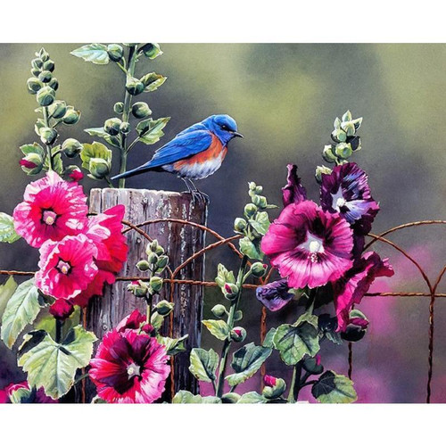 Robin Unaccompanied - DIY Painting By Numbers Kit