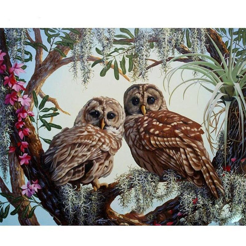 Owl Couple - DIY Painting By Numbers Kit