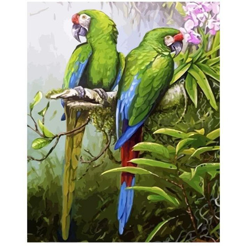 Amazing Parrots - DIY Painting By Numbers Kit