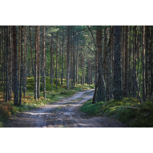 Forest's Path - DIY Painting By Numbers Kit
