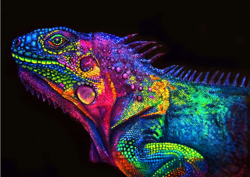 Color Chameleon - DIY Painting By Numbers Kit