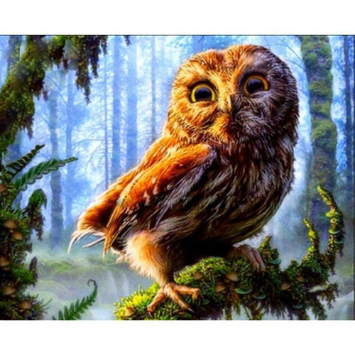 Baby Owl - DIY Painting By Numbers Kit