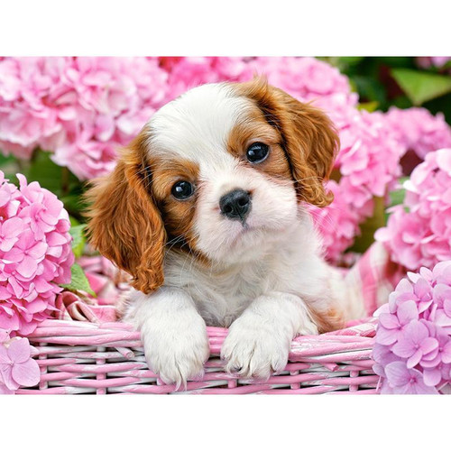 Cute Puppy In Basket - DIY Painting By Numbers Kit