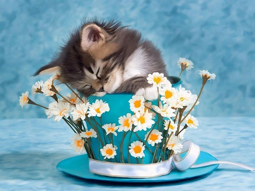 Cat Sleeping In A Cup - DIY Painting By Numbers Kit