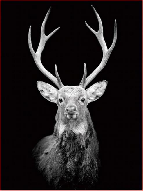 Black and White Deer - DIY Painting By Numbers Kit