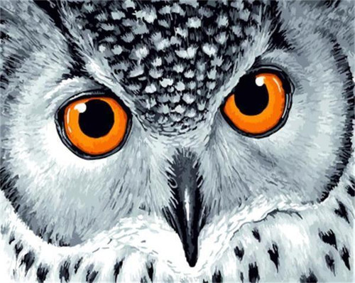 Yellow Eyed Owl - DIY Painting By Numbers Kit