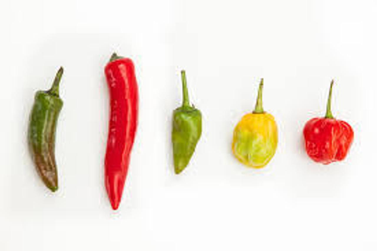 Poblano/Mole Pepper
