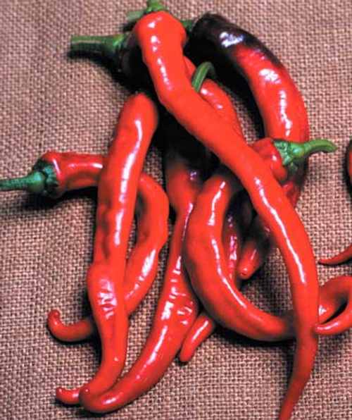 Cayenne Large Red Thick