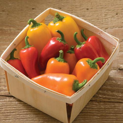 Lunchbox Orange