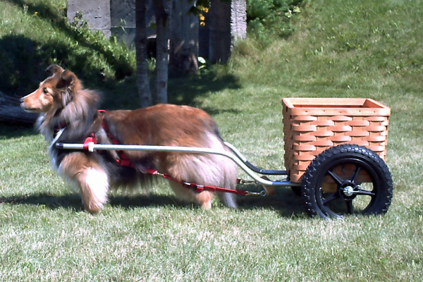 Peterboro Wooden Basket for Training Wheels