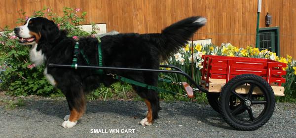 WIN Dog Carts Starting At