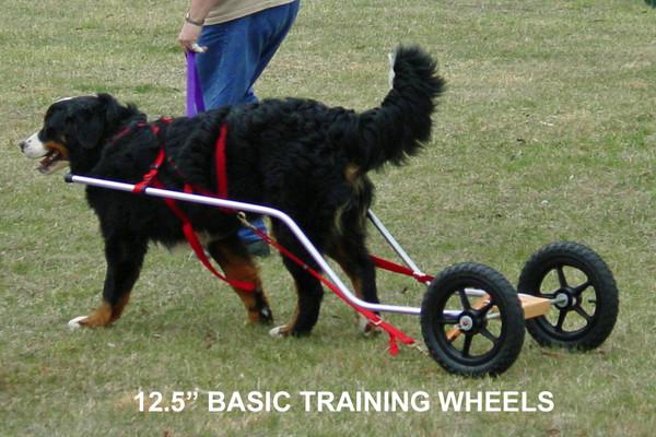 Training Wheels Starting at