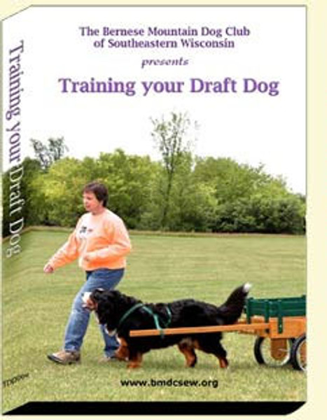 """""""Training Your Draft Dog"""" and """"Showing Your Draft Dog"""" DVD"""