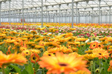 Greenhouse Growing Basics: Essential Greenhouse Supplies & Materials